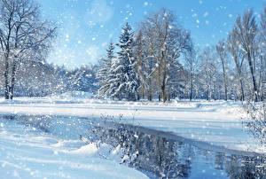 Обои Зима Парки Деревьев Ель Снега Снежинки Природа