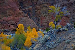 Картинки США Осень Парк Зайон национальнай парк Скале