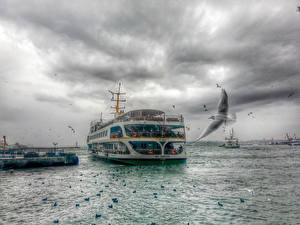 Картинки Реки Причалы Чайка Небо Круизный лайнер