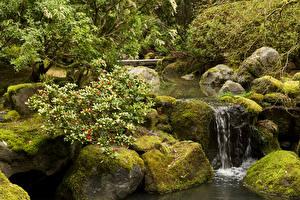Фото Штаты Сады Водопады Камни Мхом Кусты Portland Japanese Gardens Oregon Природа