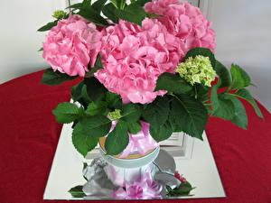Обои Букеты Гортензия Розовый Цветы