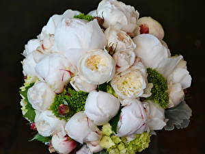Обои Букеты Лютик Розы Пионы Цветы