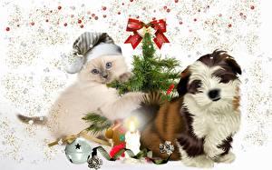 Фото Коты Собака Свечи Праздники Новый год Котенка Щенков Шапки Бантики Шарики Новогодняя ёлка Ши-тцу животное