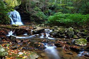 Картинки Леса Водопады Камни Осень Мхом Природа