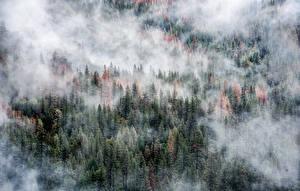 Обои США Парки Леса Йосемити Туман Природа фото