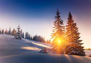 Обои Сезон года Зима Рассветы и закаты Ель Снег Лучи света Деревья Природа
