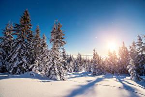 Картинка Сезон года Зима Рассветы и закаты Ель Снег Деревья Природа