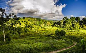 Фотографии Бразилия Кусты Трава Тропинка Bahia Природа