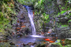 Фотография Англия Водопады Камни Рыбы Скала Мох Anglezarke Природа