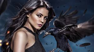 Картинки Птицы Jenna Dewan Вороны Witches of East End Jenna Dewan-Tatum Фильмы Девушки