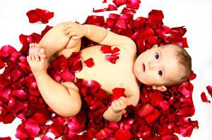 Фотографии Младенцы Лепестки Ребёнок