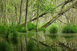 Фотографии Лес Болото Деревьев