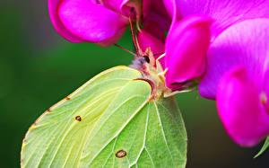 Картинка Бабочки Насекомые Вблизи