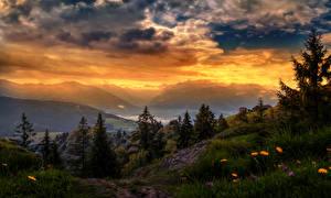 Обои Швейцария Пейзаж Рассвет и закат Гора Ромашки Небо Ель Траве Облака Природа