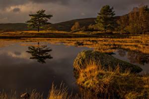 Обои Англия Камень Болотом Деревья Природа