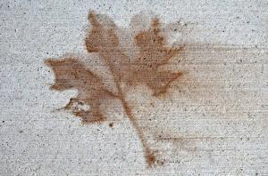 Обои Текстура Листья Клён