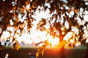 Обои Крупным планом Рассветы и закаты Листья Ветки Природа фото