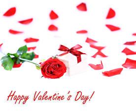 Фотография Роза День святого Валентина Красный Лепестки Бант Цветы