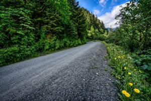 Обои Леса Дороги Одуванчики Аляска Juneau Природа фото