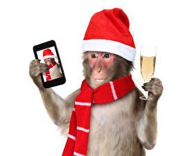 Фотография Обезьяны Рождество Шампанское Шапки Сматфоном Бокал Селфи Животные Юмор