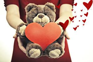 Обои День святого Валентина Плюшевый мишка Сердце Руки