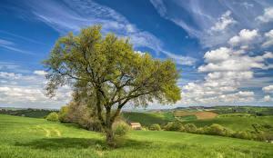 Фото Небо Луга Поля Италия Деревья Трава Облака Природа