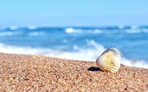 Обои Ракушки Море Песок Природа фото