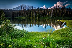 Картинки Озеро Горы Леса Пейзаж США Трава Вашингтон Маунт-Рейнир парк Природа