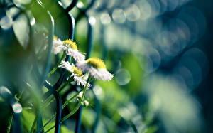 Фотографии Вблизи Ограда Цветы