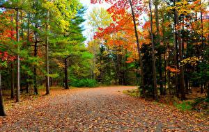 Фото Леса Осень Дороги Деревья Листья Природа