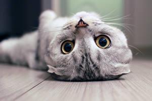 Картинка Кошка Глаза Котята Смотрит Морды Носа Животные