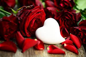 Фотографии День святого Валентина Роза Бордовые Сердечко Лепестки цветок