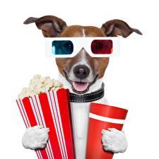 Фотография Собаки Очки Джек-рассел-терьер Забавные животное Юмор