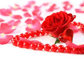 Фотография Розы День всех влюблённых Украшения Жемчуг Красных Сердечко Лепестки цветок