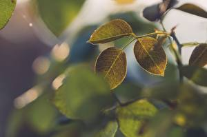Обои Крупным планом Лист Зеленых Ветки Природа