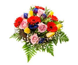 Обои Букеты Розы Герберы Тюльпаны Белый фон Цветы