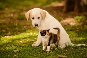 Картинка Собака Кошки Котята Щенок Двое Трава Животные