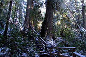 Фотография Канада Парки Лес Зимние Ствол дерева Лестницы Ucluelet Природа