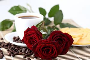Фотографии Роза Кофе Три Бордовая Зерно Цветы