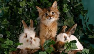 Картинка Коты Кролики Котенок Втроем Животные