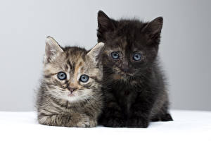 Фотографии Кошки Котята 2 Взгляд Животные