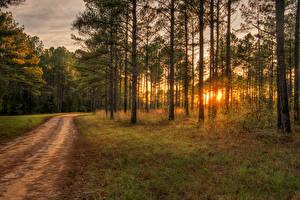 Фотография Леса Рассветы и закаты Дороги Деревья Ствол дерева Природа