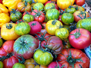 Фото Овощи Помидоры Много Вблизи Еда