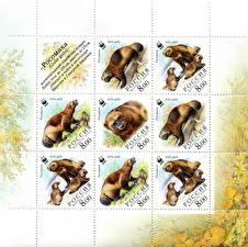 Картинка Грызуны Почтовая марка Wolverine Gulo gulo Животные