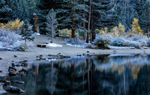 Обои Парк Зимние Побережье Камень Дерева Кусты Природа