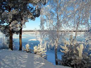 Обои Россия Зима Речка Деревья Снег Ель Сибирь Природа