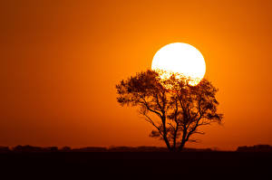 Картинка Рассветы и закаты Солнца Силуэт Дерева Природа