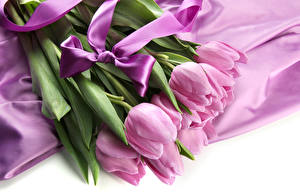 Фото Тюльпаны Бантики Фиолетовый Цветы