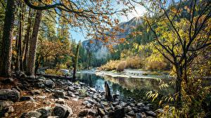 Обои США Парки Реки Леса Камни Осень Йосемити Калифорния Природа фото