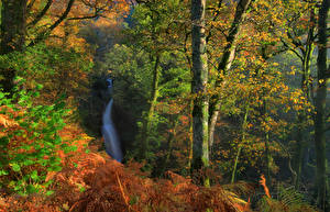 Обои Англия Парки Леса Водопады Осенние Ствол дерева Dockray Природа